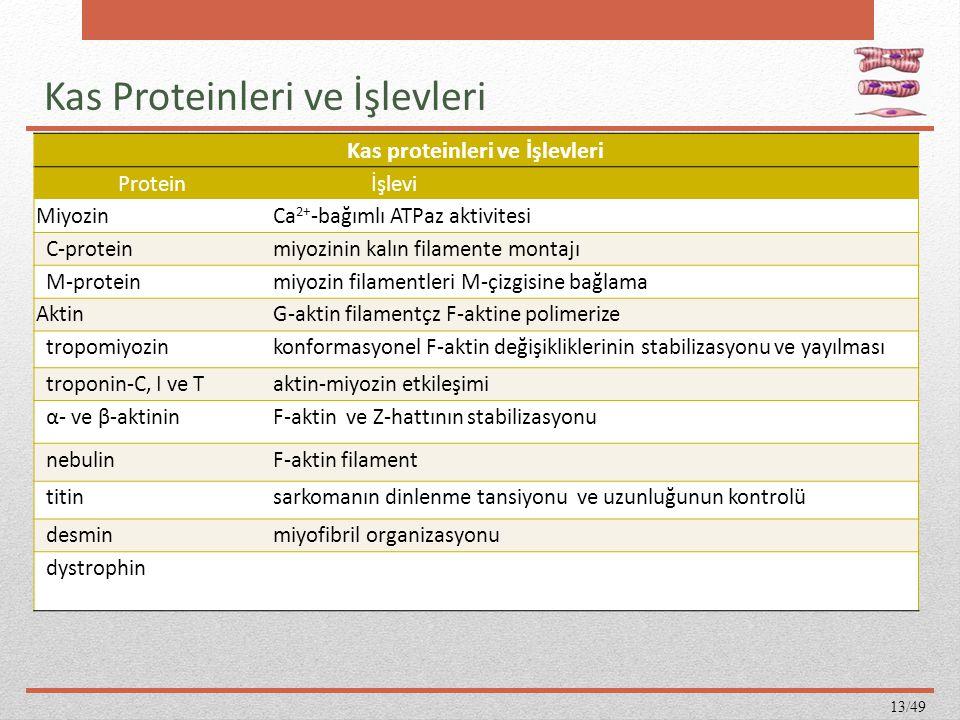 Kas Proteinleri ve İşlevleri Kas proteinleri ve İşlevleri Protein İşlevi MiyozinCa 2+ -bağımlı ATPaz aktivitesi C-proteinmiyozinin kalın filamente mon