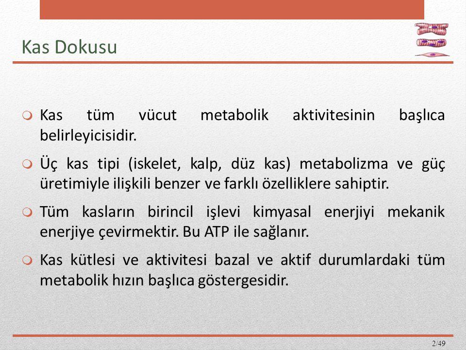 Kas Dokusu  Kas tüm vücut metabolik aktivitesinin başlıca belirleyicisidir.  Üç kas tipi (iskelet, kalp, düz kas) metabolizma ve güç üretimiyle iliş