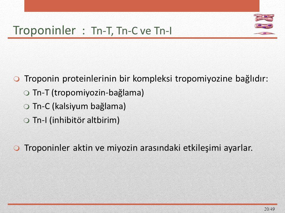 Troponinler : Tn-T, Tn-C ve Tn-I  Troponin proteinlerinin bir kompleksi tropomiyozine bağlıdır:  Tn-T (tropomiyozin-bağlama)  Tn-C (kalsiyum bağlam