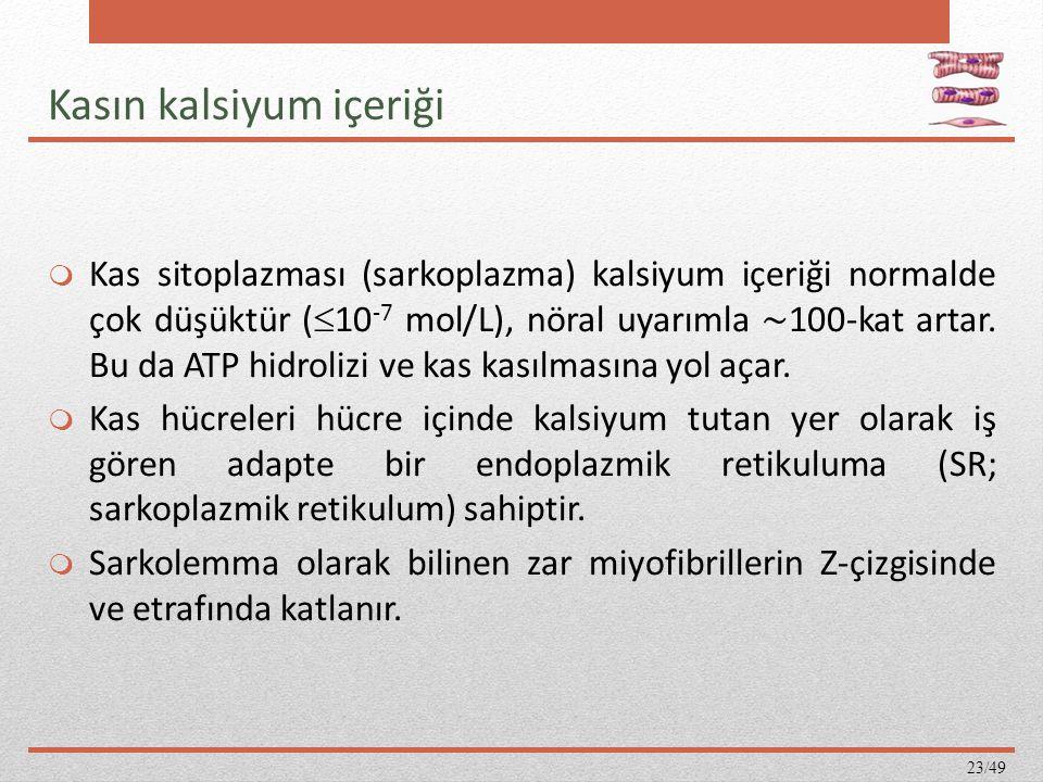 Kasın kalsiyum içeriği  Kas sitoplazması (sarkoplazma) kalsiyum içeriği normalde çok düşüktür (  10 -7 mol/L), nöral uyarımla ∼ 100-kat artar. Bu da
