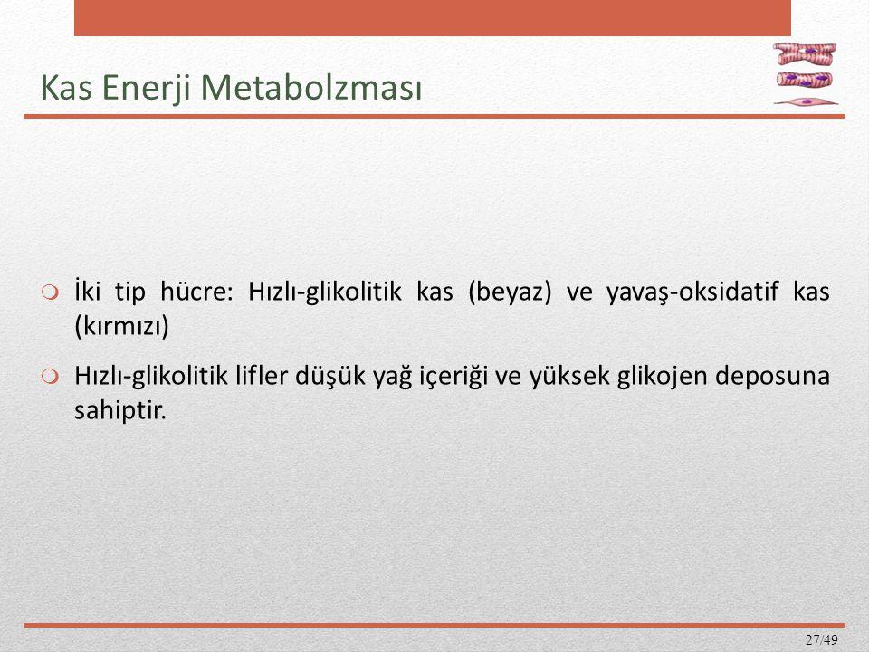Kas Enerji Metabolzması  İki tip hücre: Hızlı-glikolitik kas (beyaz) ve yavaş-oksidatif kas (kırmızı)  Hızlı-glikolitik lifler düşük yağ içeriği ve