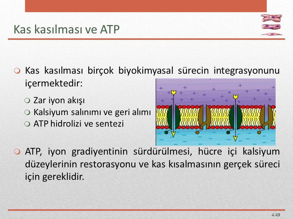 Kas kasılması ve ATP  Kas kasılması birçok biyokimyasal sürecin integrasyonunu içermektedir:  Zar iyon akışı  Kalsiyum salınımı ve geri alımı  ATP