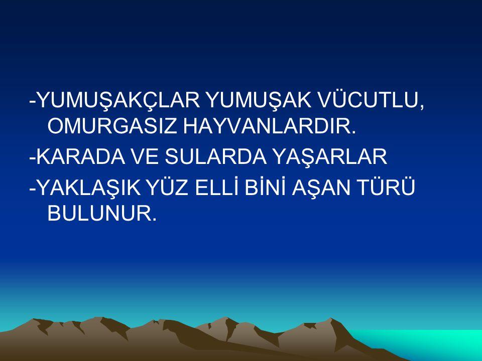 BOŞALTIM SİSTEMLERİ NASIL ÇALIŞIR.