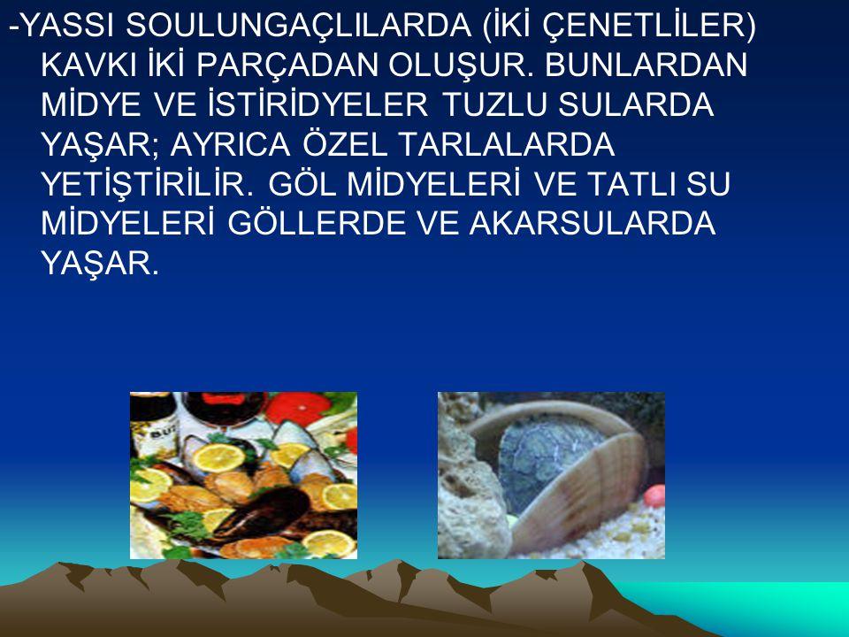 İNCİ NASIL OLUŞUR.