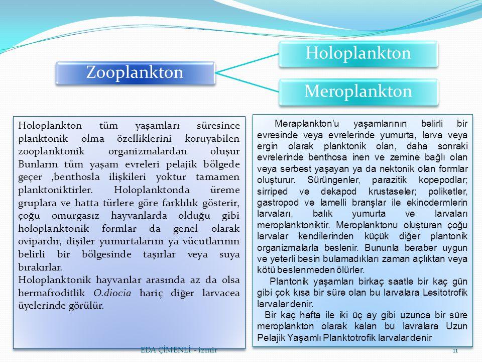 11 Zooplankton Holoplankton Meroplankton Holoplankton tüm yaşamları süresince planktonik olma özelliklerini koruyabilen zooplanktonik organizmalardan