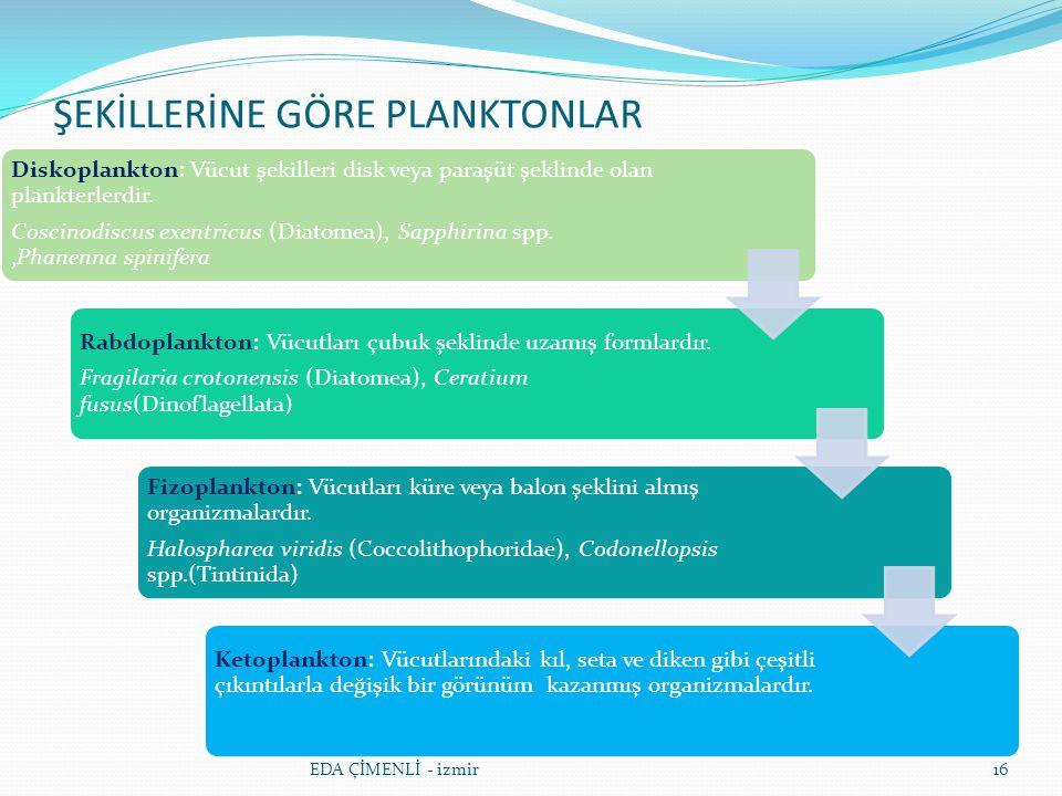 ŞEKİLLERİNE GÖRE PLANKTONLAR 16 Diskoplankton: Vücut şekilleri disk veya paraşüt şeklinde olan plankterlerdir. Coscinodiscus exentricus (Diatomea), Sa