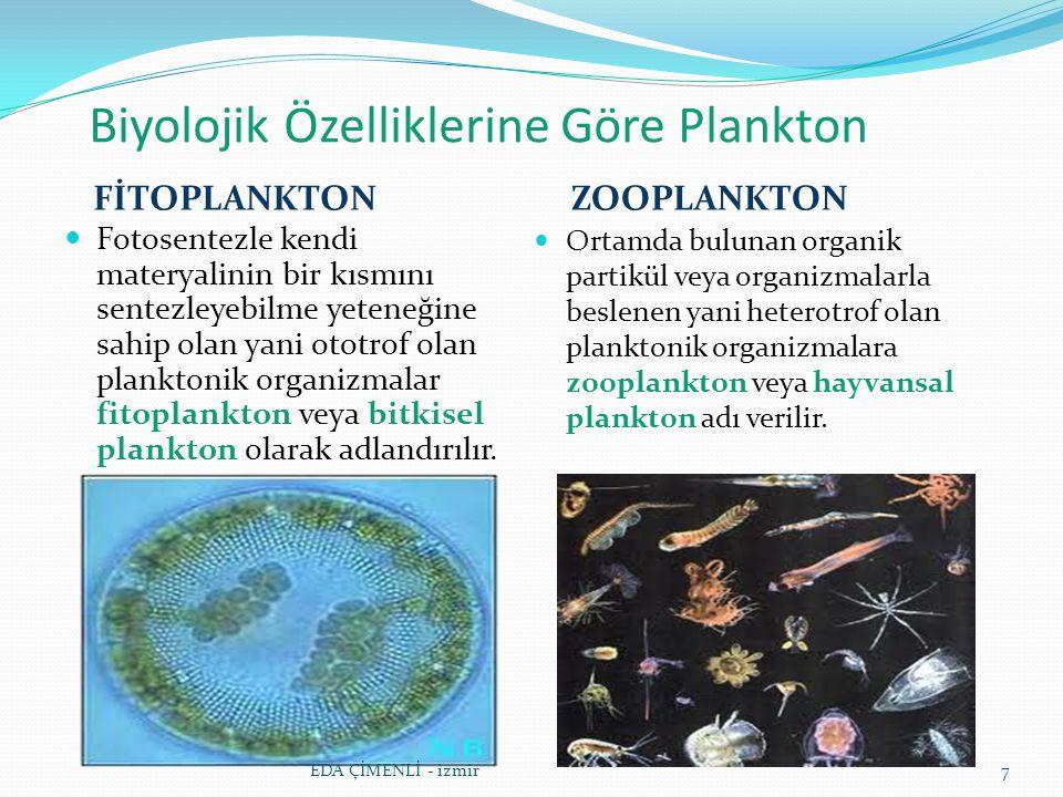 Biyolojik Özelliklerine Göre Plankton FİTOPLANKTON ZOOPLANKTON Fotosentezle kendi materyalinin bir kısmını sentezleyebilme yeteneğine sahip olan yani