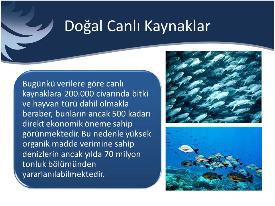 Kimyasal Kaynaklar Deniz suyunda 80'den fazla element mevcut olup, bunların okyanus ve derinlerdeki total miktarı 500*10 üzeri 14 ton olarak hesaplanmıştır.
