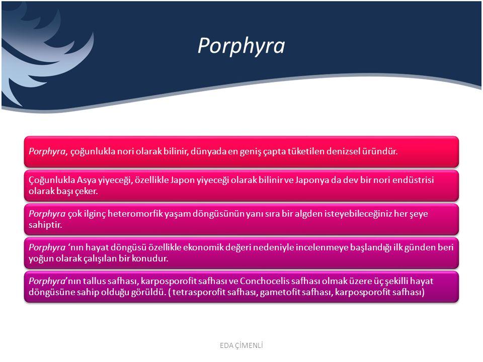 Porphyra Porphyra, çoğunlukla nori olarak bilinir, dünyada en geniş çapta tüketilen denizsel üründür. Çoğunlukla Asya yiyeceği, özellikle Japon yiyece