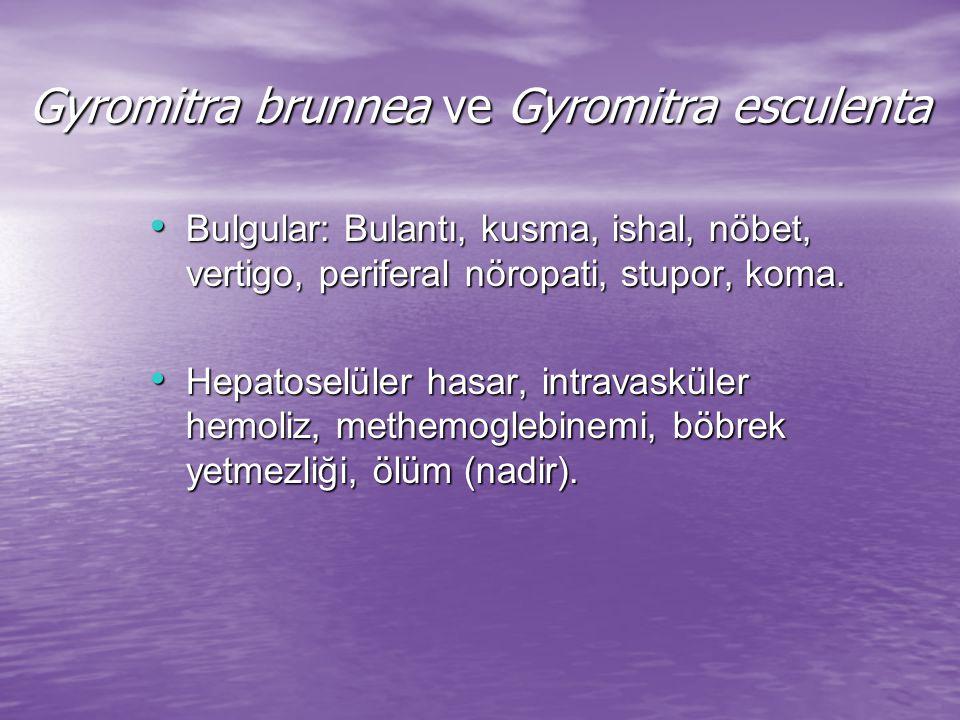 Gyromitra brunnea ve Gyromitra esculenta Tedavi: Tedavi: Gastrik lavaj, Gastrik lavaj, Aktif kömür, Aktif kömür, Nöbetlerin kontrolü Nöbetlerin kontrolü (benzodiazepin ve piridoksin 25 mg/kg) (benzodiazepin ve piridoksin 25 mg/kg)