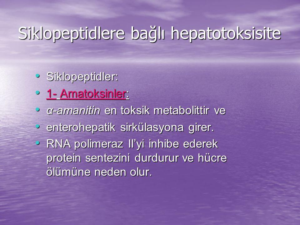 Siklopeptidler: Siklopeptidler: 1- Amatoksinler: 1- Amatoksinler: α-amanitin en toksik metabolittir ve α-amanitin en toksik metabolittir ve enterohepatik sirkülasyona girer.