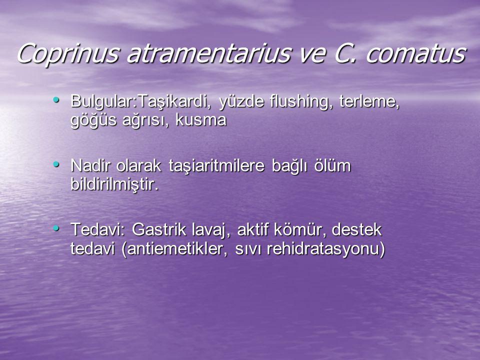 Coprinus atramentarius ve C.