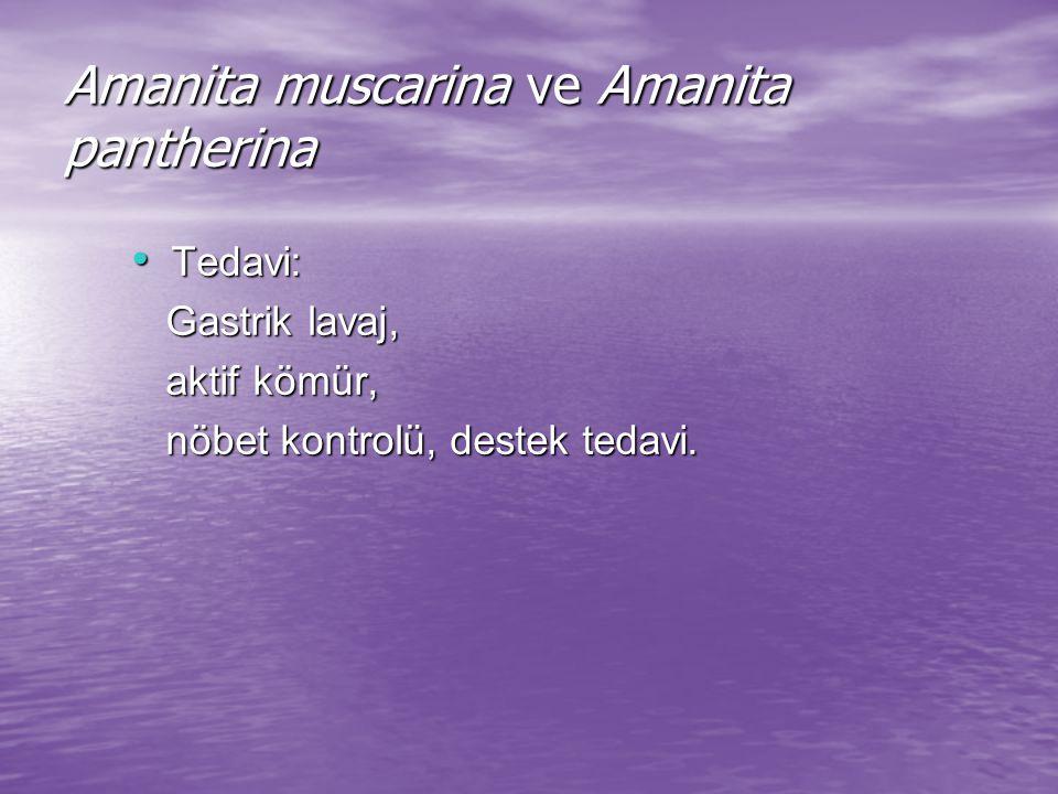 Amanita muscarina ve Amanita pantherina Tedavi: Tedavi: Gastrik lavaj, Gastrik lavaj, aktif kömür, aktif kömür, nöbet kontrolü, destek tedavi.