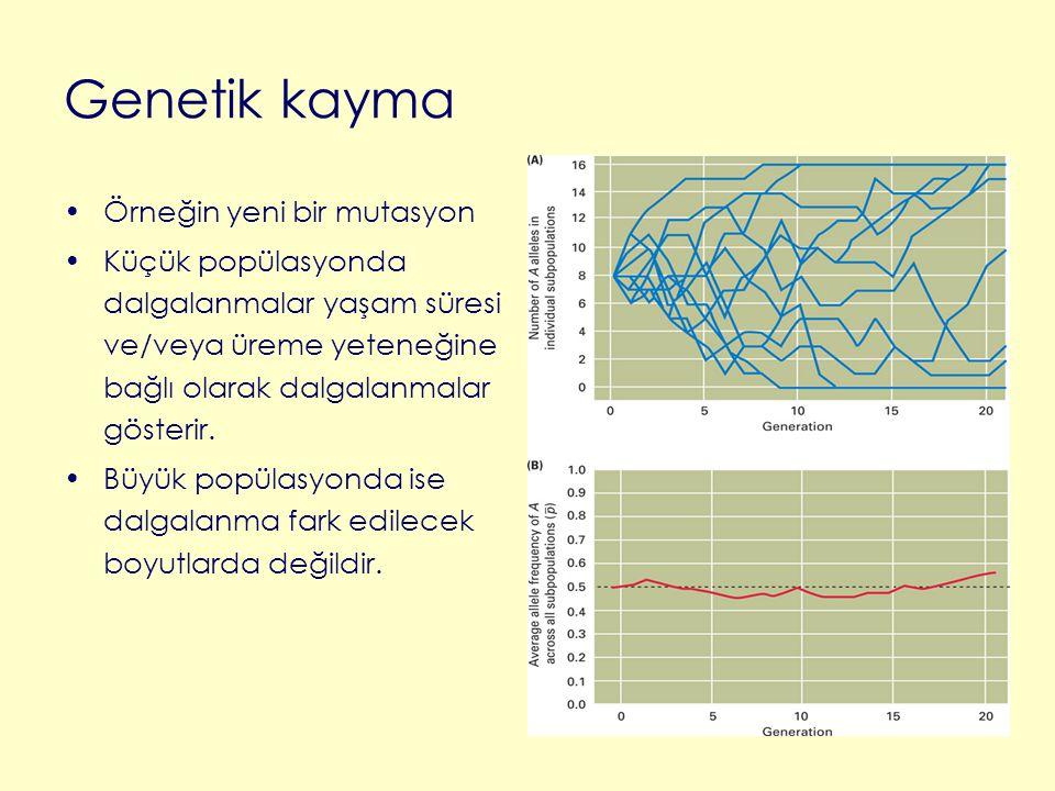 Genetik kayma Örneğin yeni bir mutasyon Küçük popülasyonda dalgalanmalar yaşam süresi ve/veya üreme yeteneğine bağlı olarak dalgalanmalar gösterir. Bü