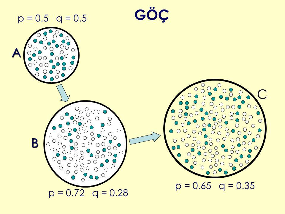 p = 0.5 q = 0.5 p = 0.72 q = 0.28 A B p = 0.65 q = 0.35 C GÖÇ