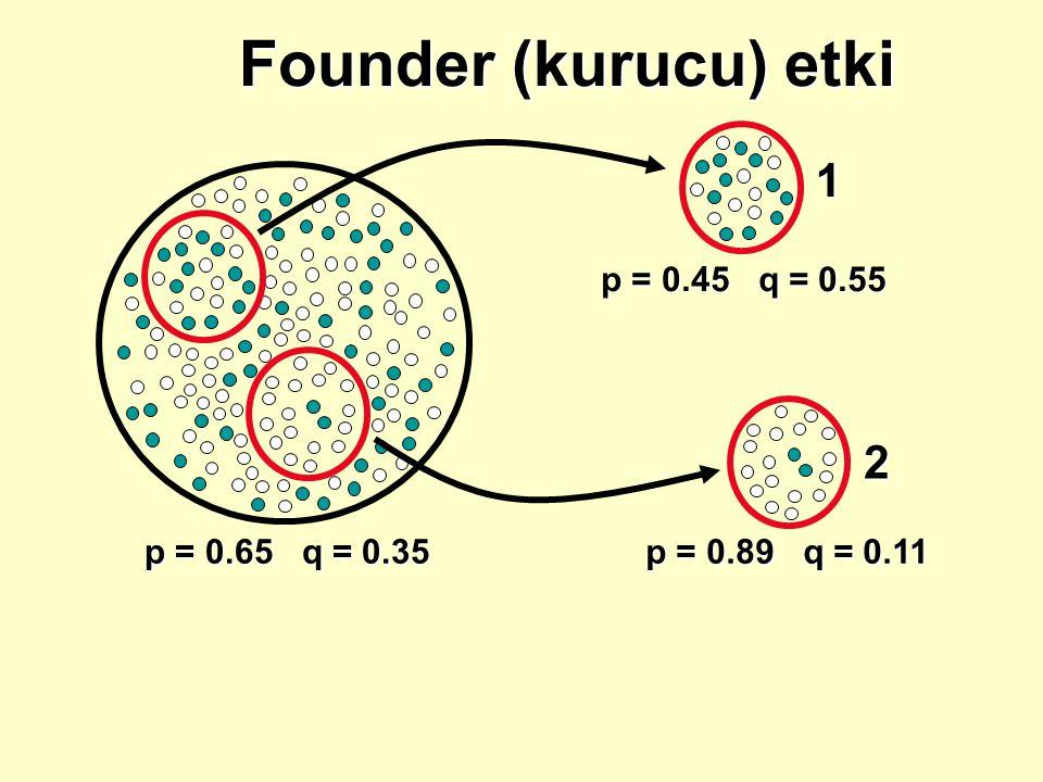 p = 0.65 q = 0.35 Founder (kurucu) etki p = 0.89 q = 0.11 p = 0.45 q = 0.55 1 2