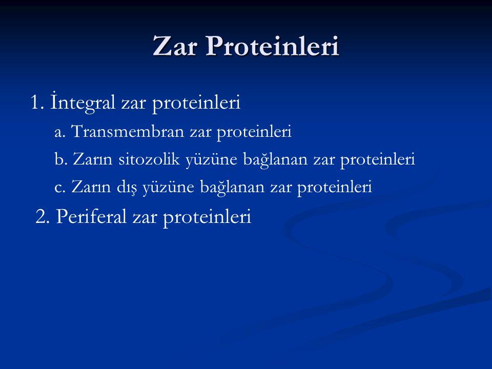 Zar Proteinleri Hücre zarında çok farklı işleve sahip proteinler bulunur. Zar proteinlerini zardaki yerleşimlerine göre,