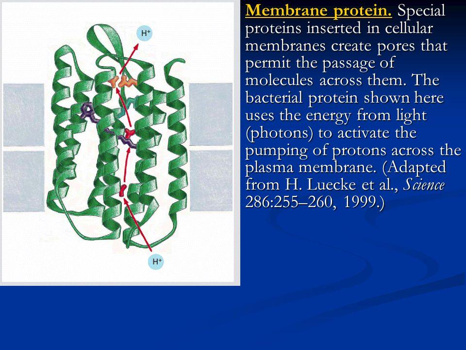 Bakteriorodopsin Yapısı çok iyi bilinen çok geçişli bir zar transport proteini de Bakteriorodopsin (Bacteriorhodopsin)'dir. Bu protein belirli bakteri