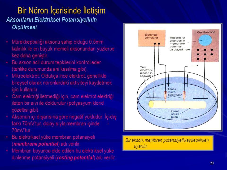20 Bir akson, membran potansiyeli kaydedilirken uyarılır. Bir Nöron İçerisinde İletişim Aksonların Elektriksel Potansiyelinin Ölçülmesi Mürekkepbalığı