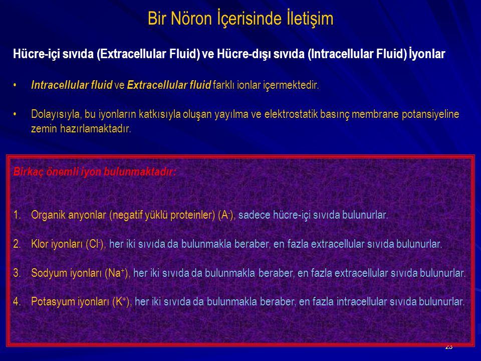 23 Bir Nöron İçerisinde İletişim Hücre-içi sıvıda (Extracellular Fluid) ve Hücre-dışı sıvıda (Intracellular Fluid) İyonlar Intracellular fluid ve Extr