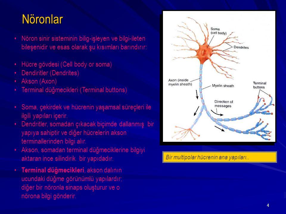 5 Çiftkutuplu nöron ( Bipolar neuron ) (duyusal bilgiyi iletir (görme, işitme, vs.)) - [Duyusal Sistem] Tekkutuplu Nöron ( Unipolar neuron ) (duyusal bilgiyi iletir (dokunma, işitme, vs.)) - [Duyusal Sistem] Çokkutuplu Nöron ( Multipolar neuron ) (en yaygın tip) Terminal Düğmeciği ( Terminal button ) : Bir aksiyon potansiyeli akson üzerinden akarken nörotransmiter (NTM) adı verilen bir kimyasal salgılar.