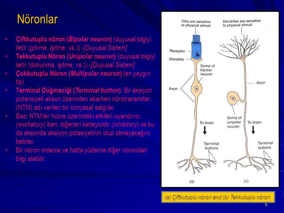 5 Çiftkutuplu nöron ( Bipolar neuron ) (duyusal bilgiyi iletir (görme, işitme, vs.)) - [Duyusal Sistem] Tekkutuplu Nöron ( Unipolar neuron ) (duyusal