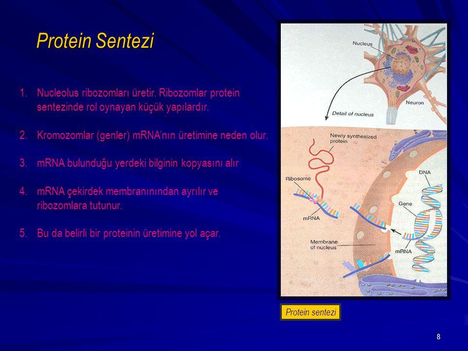 39 Uyandırıcı ve ketleyici sinapslar tarafından üretilen depolarizasyonların ve hiperpolarizasyonların ölçülmesi.