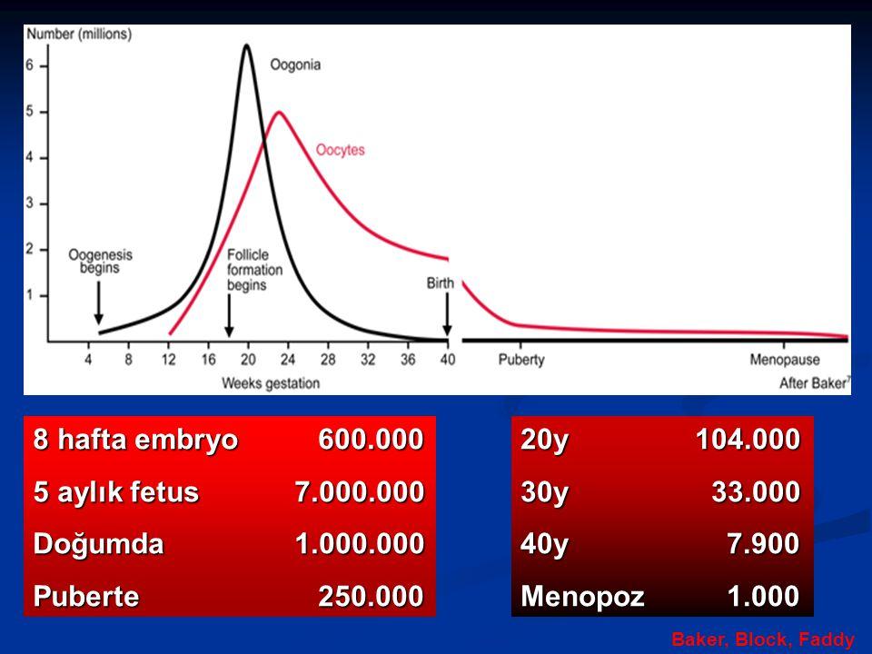 8 hafta embryo 600.000 5 aylık fetus7.000.000 Doğumda1.000.000 Puberte 250.000 20y104.000 30y 33.000 40y 7.900 Menopoz 1.000 Baker, Block, Faddy