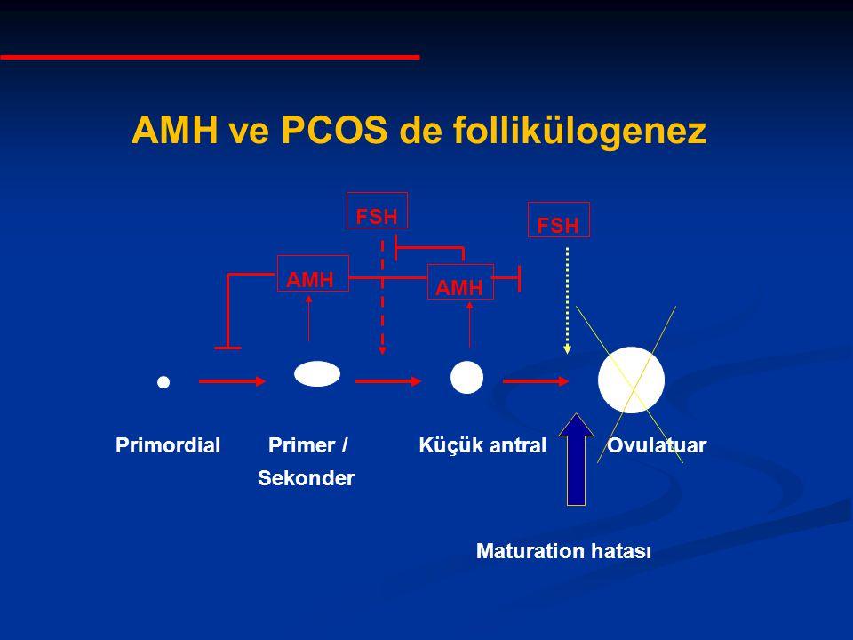 Primordial Primer / Küçük antral Ovulatuar Sekonder AMH FSH AMH ve PCOS de follikülogenez Maturation hatası