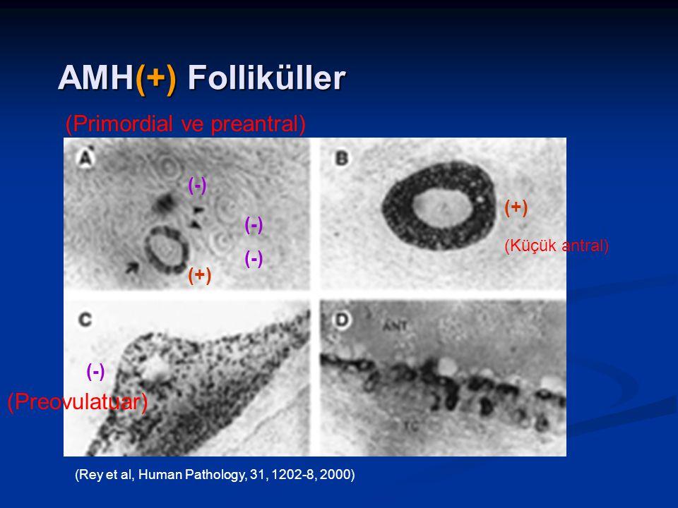 AMH(+) Folliküller (+) (-) (+) (-) (Preovulatuar) (Küçük antral) (-) (Primordial ve preantral) (Rey et al, Human Pathology, 31, 1202-8, 2000)