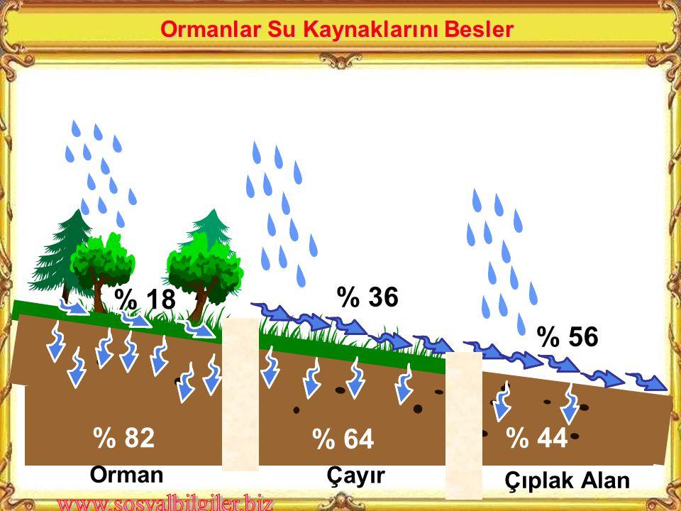 Çıplak Alan Çayır Orman % 82 % 64 % 44 % 18 % 36 % 56 Ormanlar Su Kaynaklarını Besler