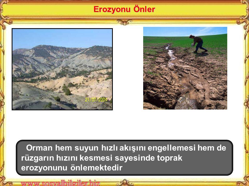 Erozyonu Önler Orman hem suyun hızlı akışını engellemesi hem de rüzgarın hızını kesmesi sayesinde toprak erozyonunu önlemektedir