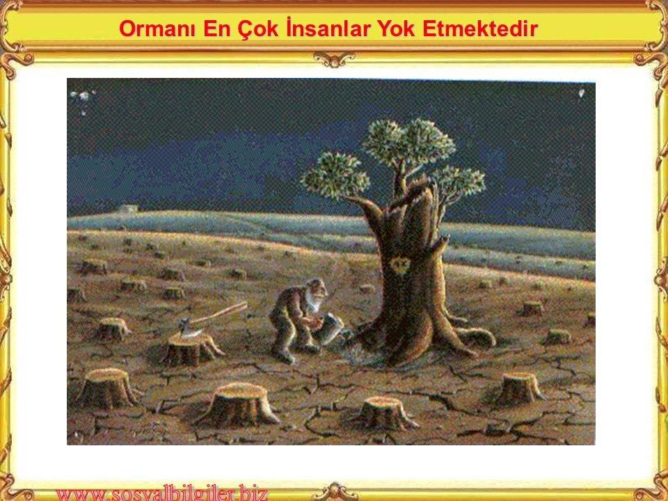 Ormanı En Çok İnsanlar Yok Etmektedir
