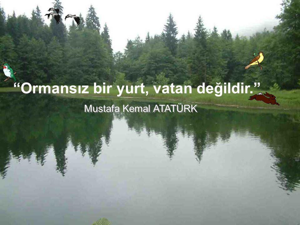 Ormansız bir yurt, vatan değildir. Mustafa Kemal ATATÜRK