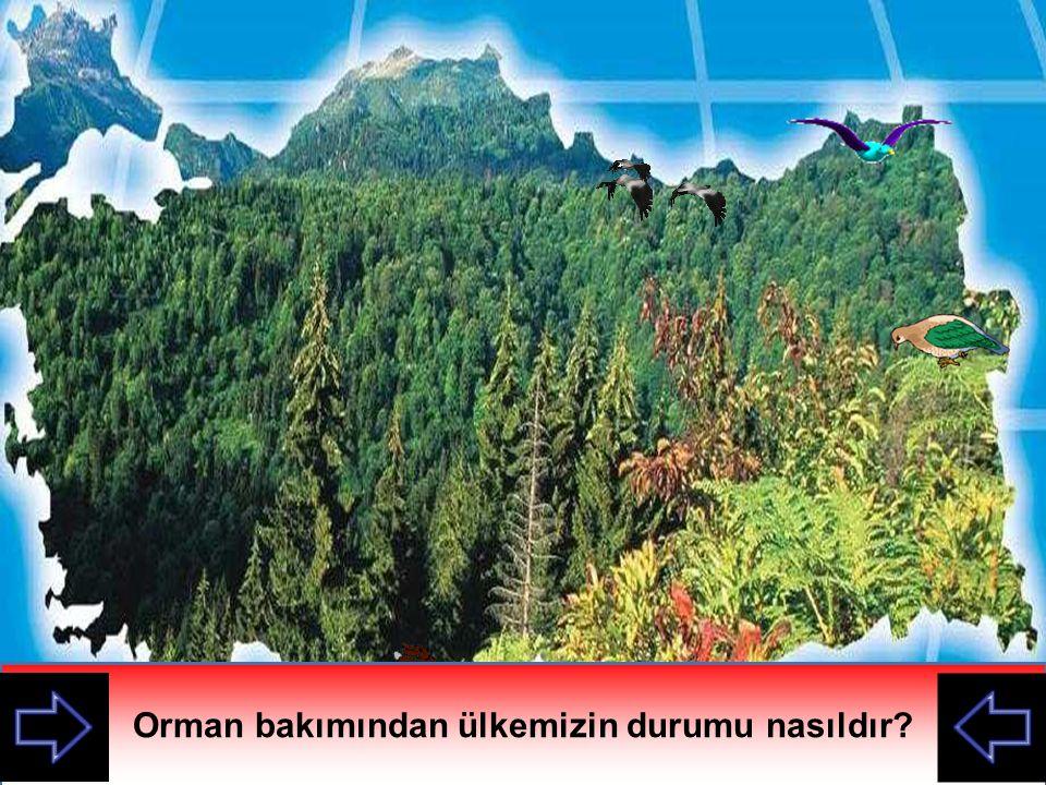 Orman bakımından ülkemizin durumu nasıldır?