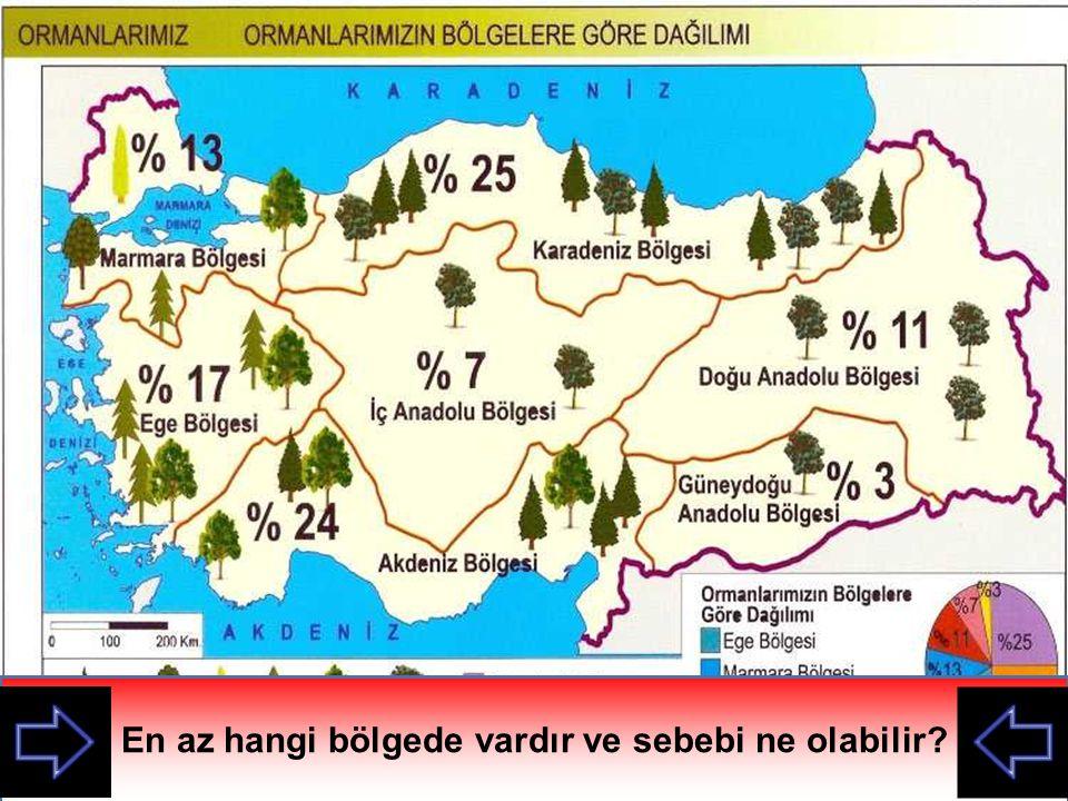 Ormanların Karadeniz ve Akdeniz bölgelerinde yoğunlaşmasının sebebi ne olabilir.
