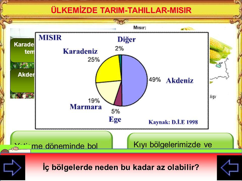 A) Buğdayın temel besin maddesi olması B) Küçükbaş hayvan sayısının artması C) Yağış miktarının yıllara göre farklılıklar göstermesi D) Buğday tarımının daha çok makinelerle yapılması Türkiye'de ekim alanı çok fazla değişmemesine rağmen buğday üretiminin bazı yıllar az bazı yıllar çok yetişmesi aşağıdakilerden hangisi ile açıklanabilir?
