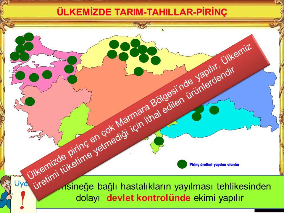 ÜLKEMİZDE TARIM-TAHILLAR-MISIR Yetişme döneminde bol su ve nem isteyen bir üründür. Kıyı bölgelerimizde ve sulanabilen yerlerde yetiştirilir Karadeniz