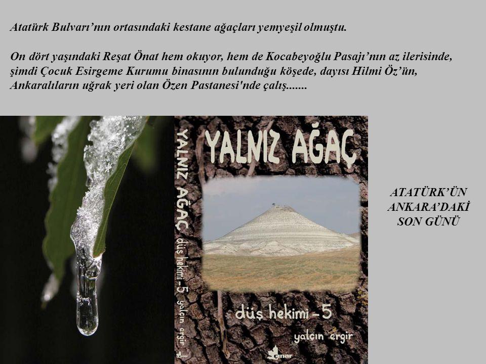 Atatürk Bulvarı'nın ortasındaki kestane ağaçları yemyeşil olmuştu.