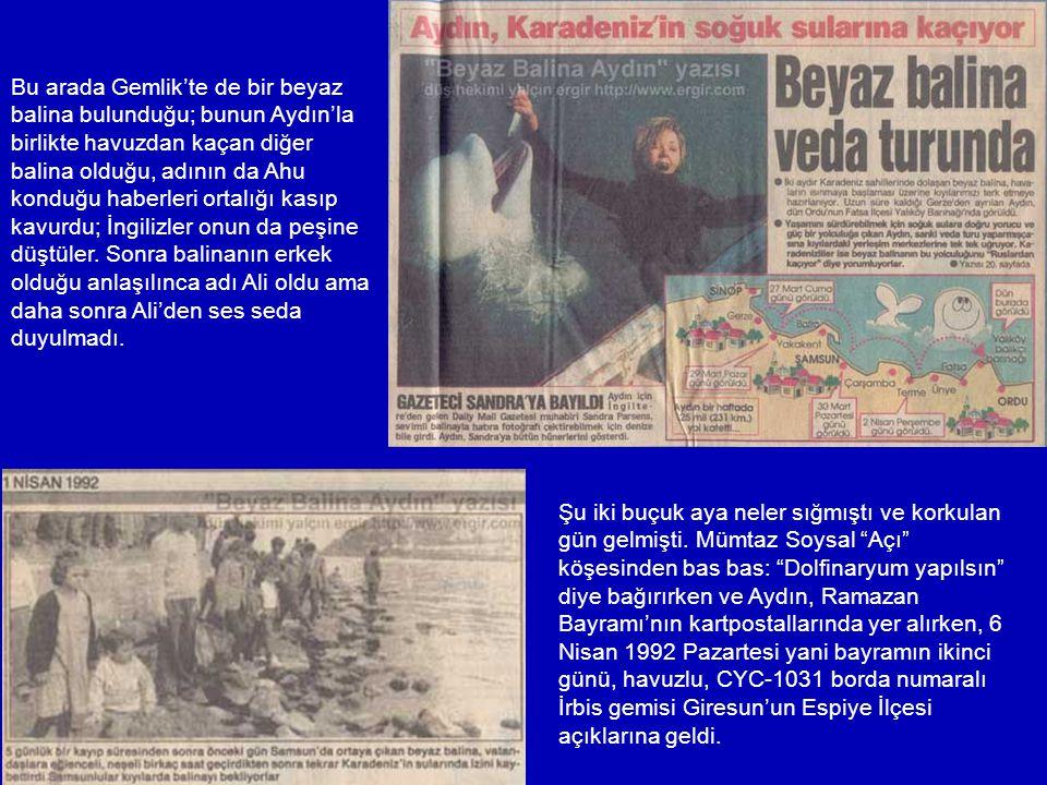 Derken kara haber geldi. Ukraynalılar balinalarını ülkelerarası hukuk maddelerine dayanarak geri istiyorlardı. Yer yerinden oynadı – Aydın ganimet sta