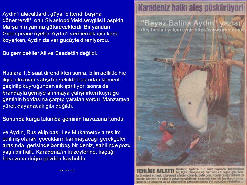 Bu arada Gemlik'te de bir beyaz balina bulunduğu; bunun Aydın'la birlikte havuzdan kaçan diğer balina olduğu, adının da Ahu konduğu haberleri ortalığı