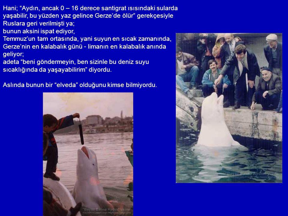"""Derken Aydın yeniden kaçtı. 14 Nisan 1993'te, """"Sivastopol'e kendi başına dönemeyeceği için almaya geldiklerini"""" söyleyenlere inat; yeniden yuvasına, s"""