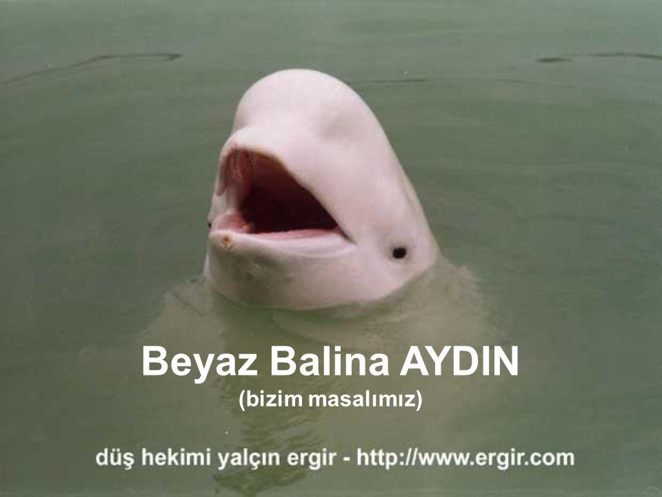 Beyaz Balina AYDIN (bizim masalımız) ses düğmesini açabilirsiniz