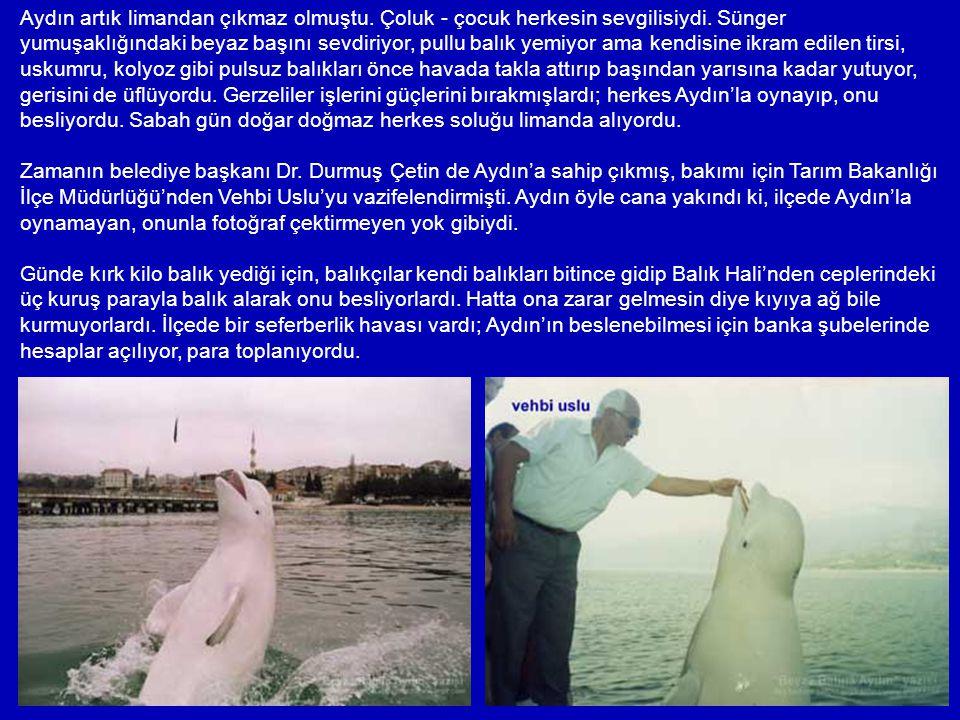 25 Ocak 1992 günü, Gerze'nin Gürzüvet (Yenikent) mevkiinde, ilk Mehmet İzmirli görmüştü onu ve - yunus dese, yunus değil – kocaman, sırtında yüzgeci o
