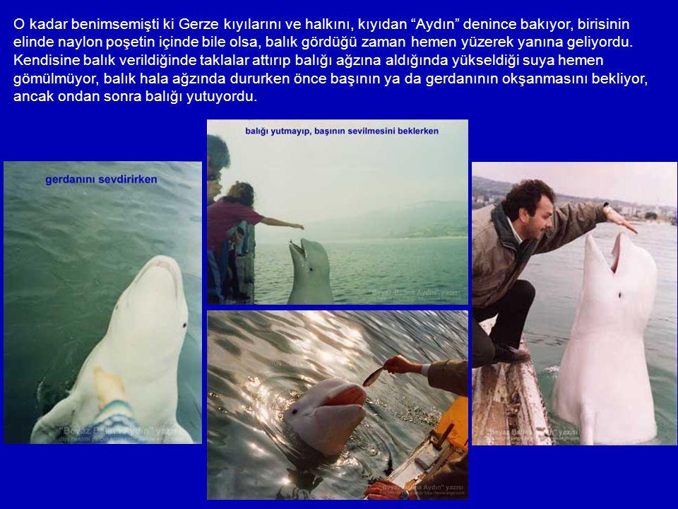Bu arada Aydın'ın bilgileri de oluşmaya başlamıştı. Aydın; Ukrayna'nın Sivastopol Limanı'ndan gelmiş Beluga türü (Delphinapterus leucas) bir beyaz bal