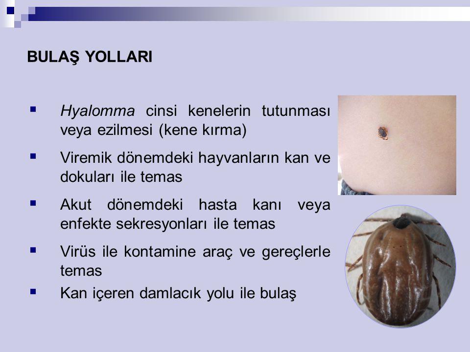 BULAŞ YOLLARI  Hyalomma cinsi kenelerin tutunması veya ezilmesi (kene kırma)  Viremik dönemdeki hayvanların kan ve dokuları ile temas  Akut dönemde
