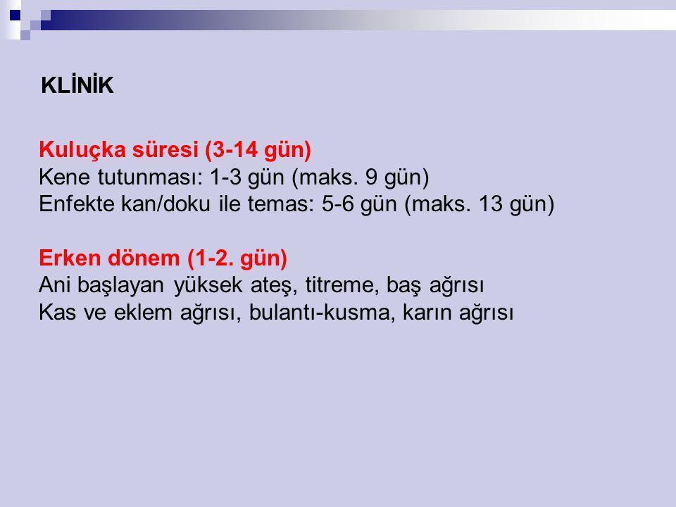 KLİNİK Kuluçka süresi (3-14 gün) Kene tutunması: 1-3 gün (maks. 9 gün) Enfekte kan/doku ile temas: 5-6 gün (maks. 13 gün) Erken dönem (1-2. gün) Ani b