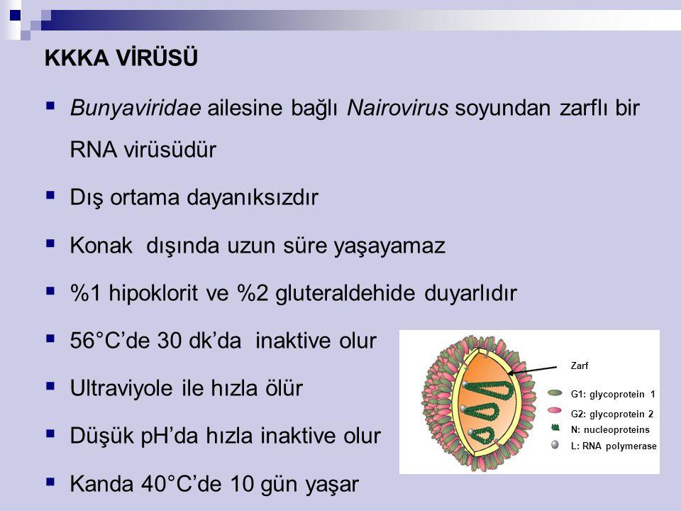 KKKA VİRÜSÜ  Bunyaviridae ailesine bağlı Nairovirus soyundan zarflı bir RNA virüsüdür  Dış ortama dayanıksızdır  Konak dışında uzun süre yaşayamaz