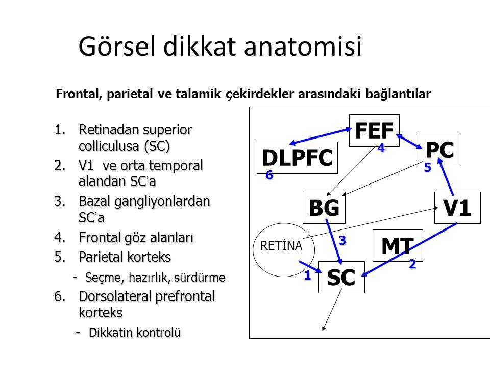 1.Retinadan superior colliculusa (SC) 2.V1 ve orta temporal alandan SC ' a 3.Bazal gangliyonlardan SC ' a 4.Frontal göz alanları 5.Parietal korteks - Seçme, hazırlık, sürdürme - Seçme, hazırlık, sürdürme 6.Dorsolateral prefrontal korteks - Dikkatin kontrolü - Dikkatin kontrolü DLPFC FEF PC V1 MT SC BG 1 2 3 4 5 6 Frontal, parietal ve talamik çekirdekler arasındaki bağlantılar RETİNA Görsel dikkat anatomisi