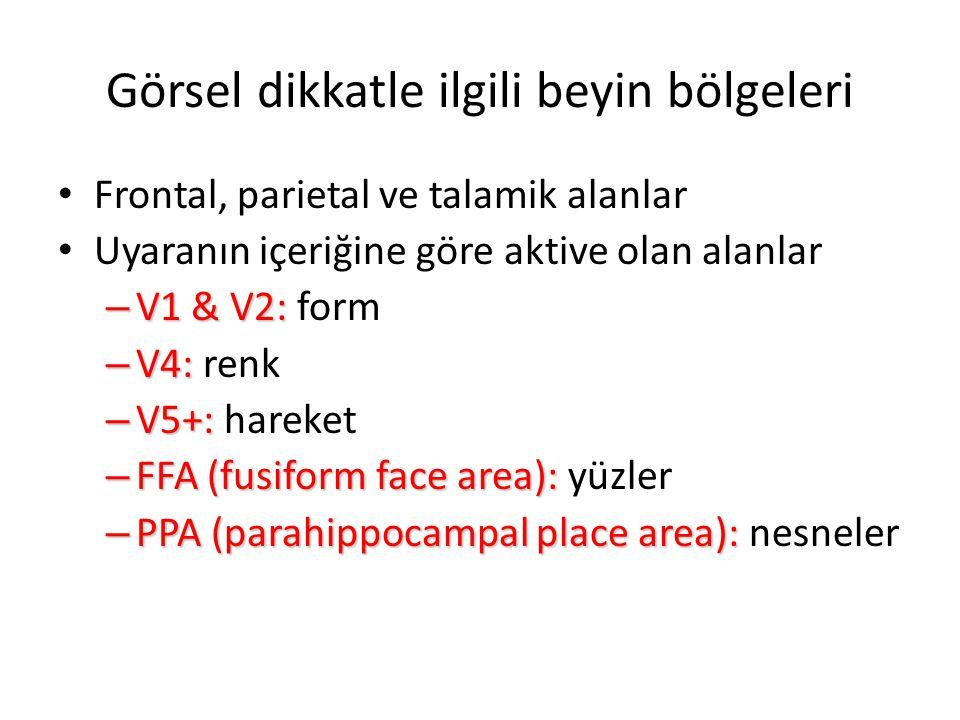 Görsel dikkatle ilgili beyin bölgeleri Frontal, parietal ve talamik alanlar Uyaranın içeriğine göre aktive olan alanlar – V1 & V2: – V1 & V2: form – V4: – V4: renk – V5+: – V5+: hareket – FFA(fusiform face area): – FFA (fusiform face area): yüzler – PPA (parahippocampal place area): – PPA (parahippocampal place area): nesneler